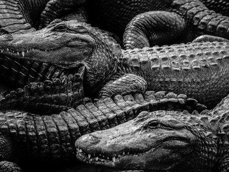 Alligator Farm Zoological Park