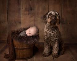 nyfødtfoto med hund