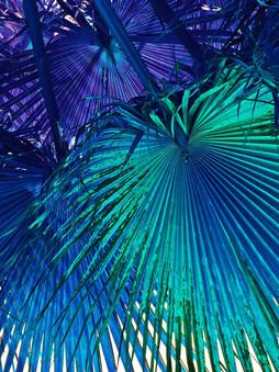 Just Palms