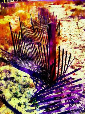 Winding Dune Fence