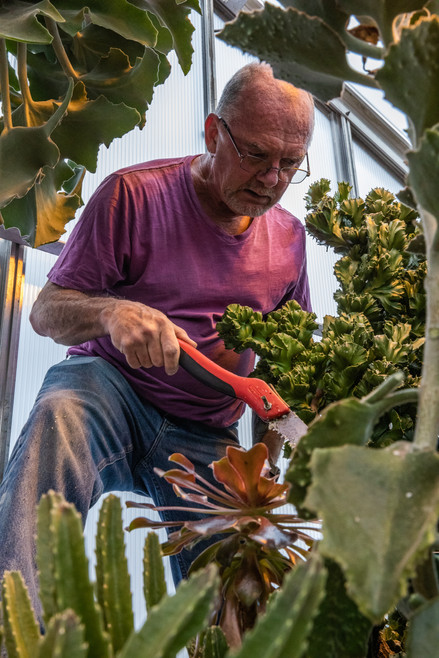 Ohio University green house manager Harold Blacier trims overgrown branches of a cacti plant on Wednesday, April 17, 2019.