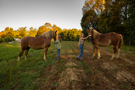 Sisters Elsie (L) and Adallie Fox (R) tame the family horses Tik and Tok after they broke out of the stables in New Marshfield, Ohio, on the morning of Wednesday, Sept. 18, 2020.