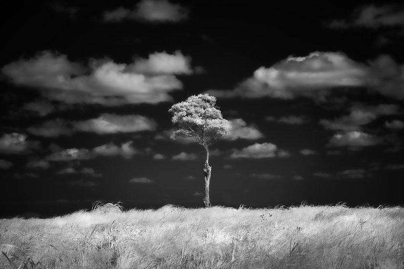 Infrared Image - Maleny, Sunshine Coast, Queensland