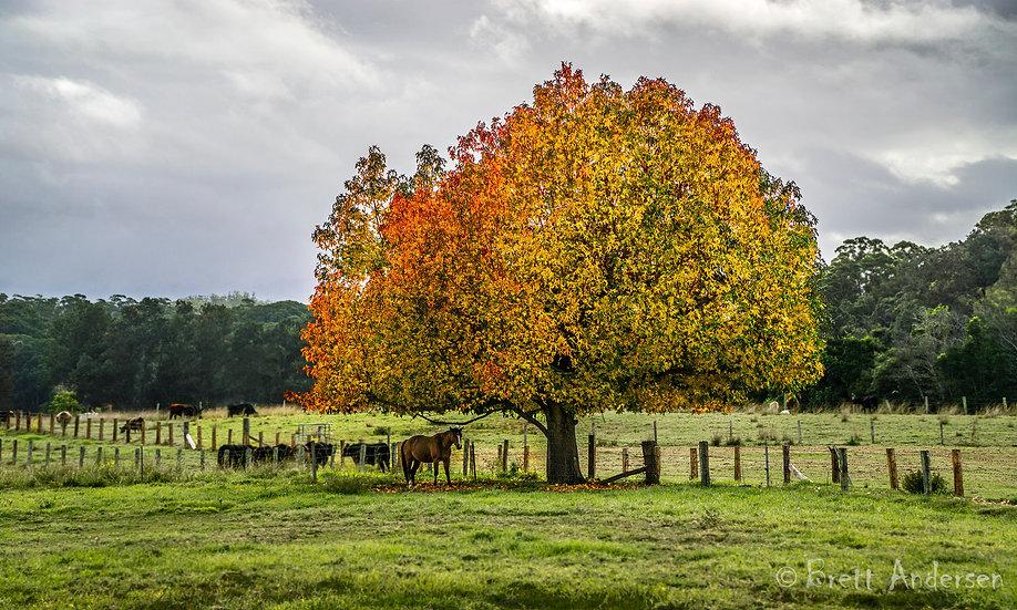 Scenic image at Bellengen, NSW