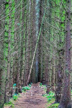28 -- Beltany Trees