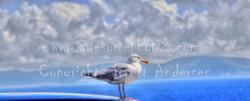 5 - Dingle Seagull