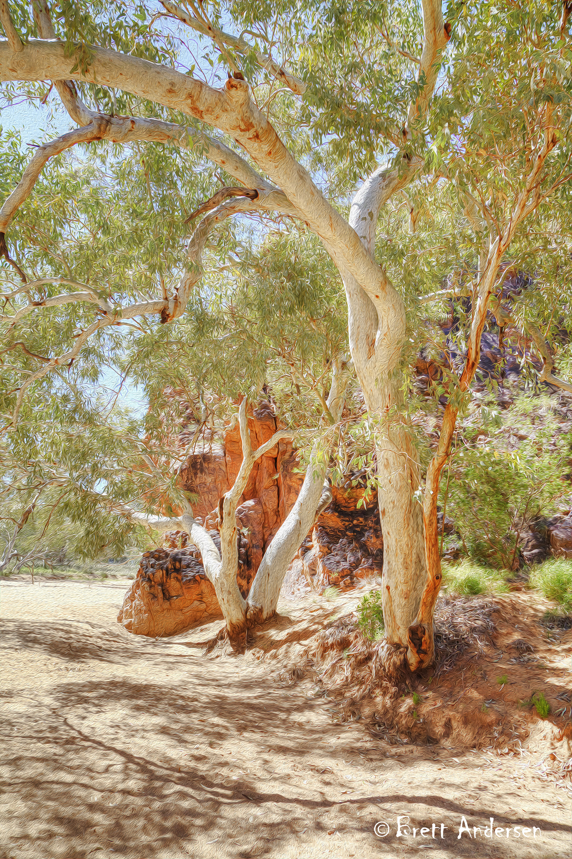 Alice Springs - Trees_4732 - Web