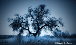 Alice Springs - 4702 - Cyanotype - Web