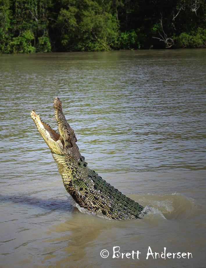 BA - Croc-3-Web