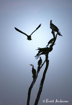 Mt Isa - Birds 2 - New - Web