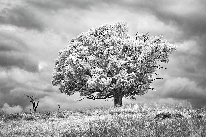 Infrared Image - Esk, Queensland