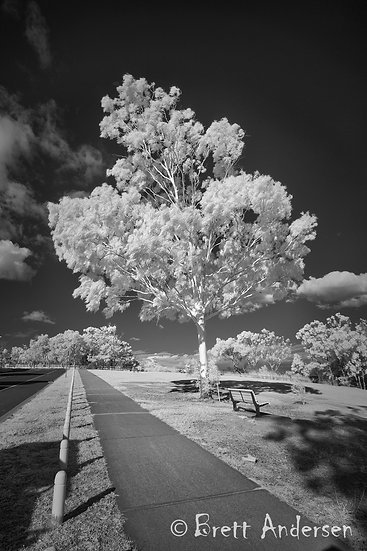 Infrared Image - Shorncliffe, Queensland
