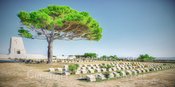 Turkey - Lone Pine - 1 - Web