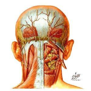 douleur au crâne et ostéopathie à lyon