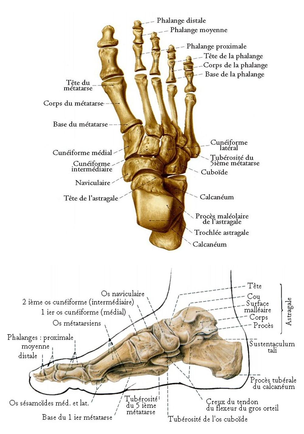 Ostéopathe lyon / Spécialiste des douleurs du pied