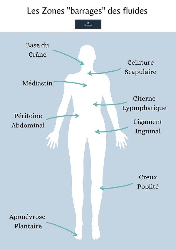 Drainge corporel, lymphatique et remodelant du corp. Amincissement du corps par des techniques de palper rouler.