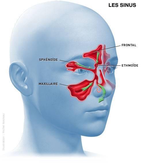 les sinus aériens
