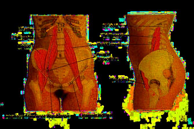 Muscle ilio-psoas et lombalgies chroniques: comment votre ostéopathe peut vous aider ?