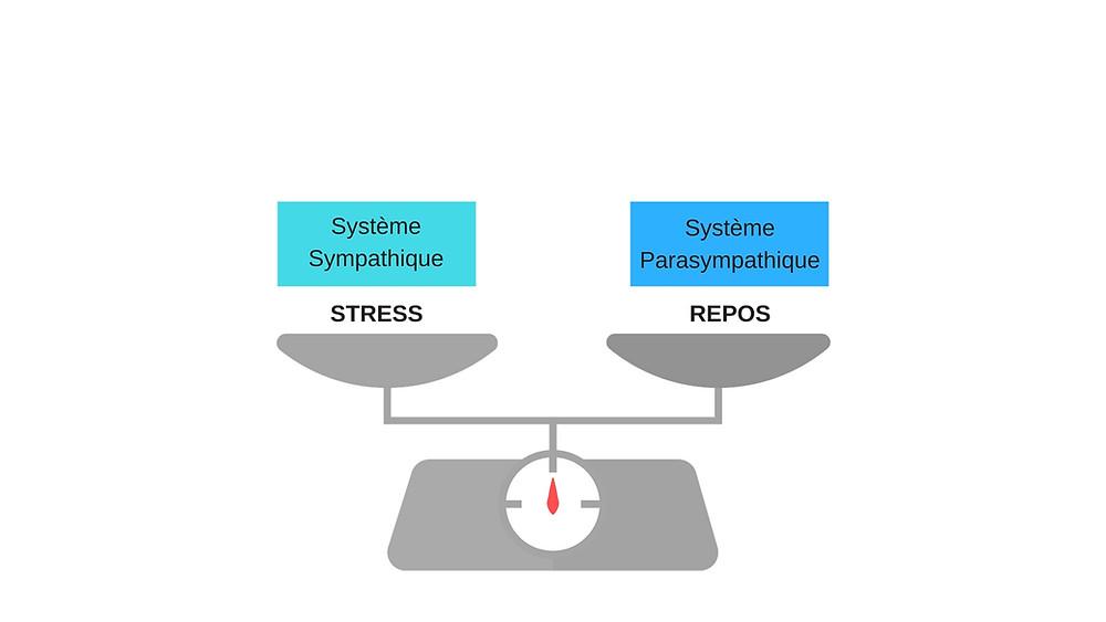 équilibre stress repos