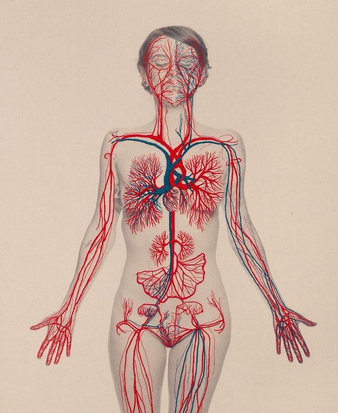 Système vasculaire: Une voie essentielle dans la prise en charge en Ostéopathie.