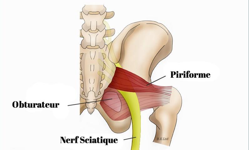 Piriforme et ostéopathie