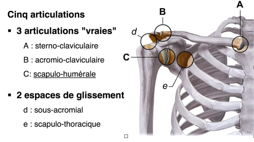 ostéopathie et épaules douloureuses lyon