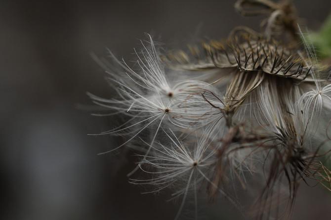 Les Allergies: Comment les soulager avec l'ostéopathie ?