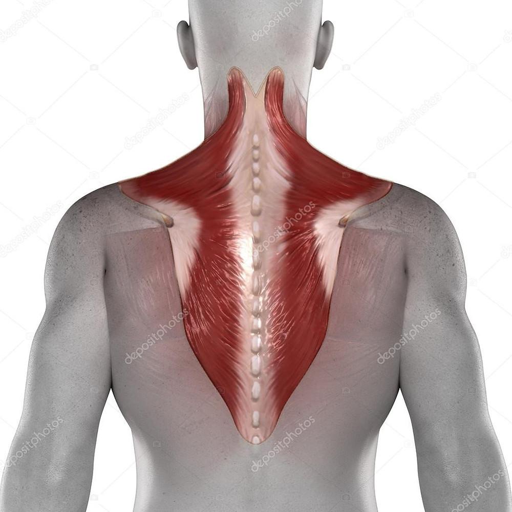 Douleur du trapèze et ostéopathie