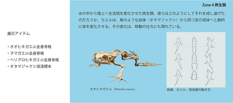 Zone4紹介.jpg