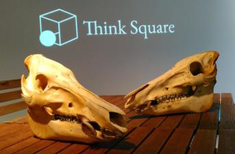 イノシシ(オス、メス)頭骨