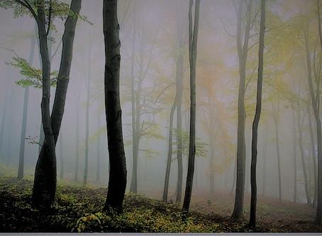 """""""I Hug Trees"""" song"""