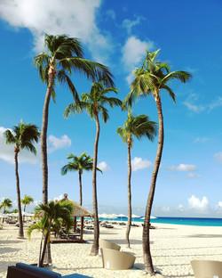 Aruba_bucuti_beach_palm trees_sky