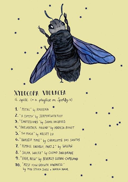 xylocopa-violacea-1.jpg