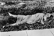 Elizabeth Short (Black Dahlia).jpg
