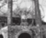 Gargoyle Corpsewood.png