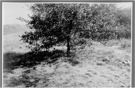 Яблоня, рядом с которой нашли тела