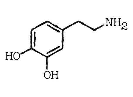 Voeding & Brein | Dopamine
