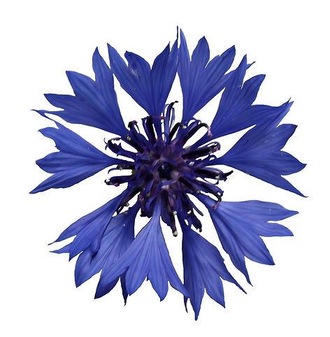 jardin floral design,  fort myers, florist, ft, images, pictures, photos, blue