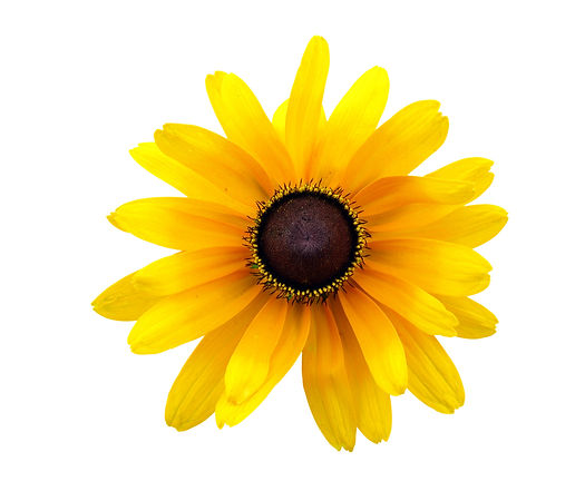 jardin floral design, fort myers, florist, ft,  images, pictures, photos, yellow
