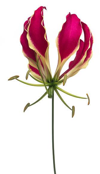 jardin floral design,  fort myers, florist, ft, images, pictures, photos, red