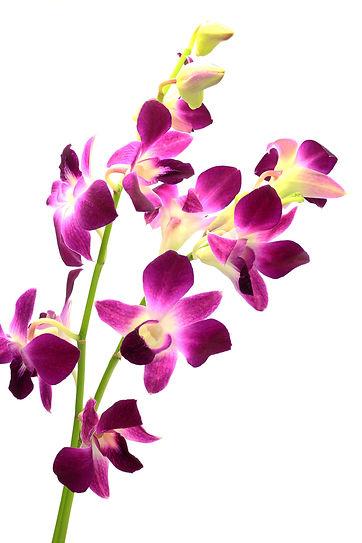 jardin floral design, fort myers, florist, ft,  images, pictures, photos, purple