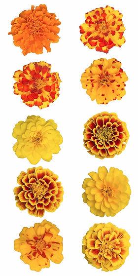 jardin floral design,  fort myers, florist, ft, images, pictures, photos, orange, yellow