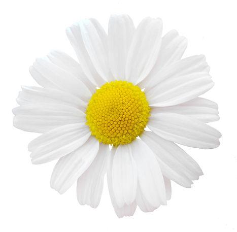 jardin floral design, fort myers, florist, ft,  images, pictures, photos, white