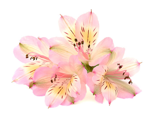 wedding flowers, floral design, fort myers, florist, ft, images, pictures, photos, pink