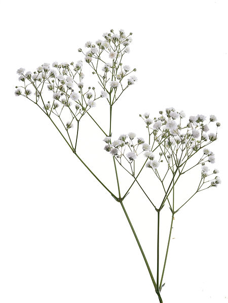 jardin floral design,  fort myers, florist, ft, images, pictures, photos,white