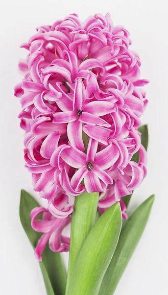 jardin floral design, fort myers, florist, ft,  images, pictures, photos, pink