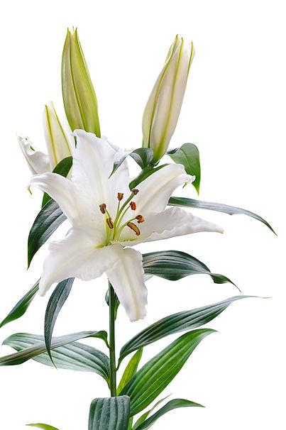 jardin floral design, fort myers, florist, ft,  images, photos, pictures,