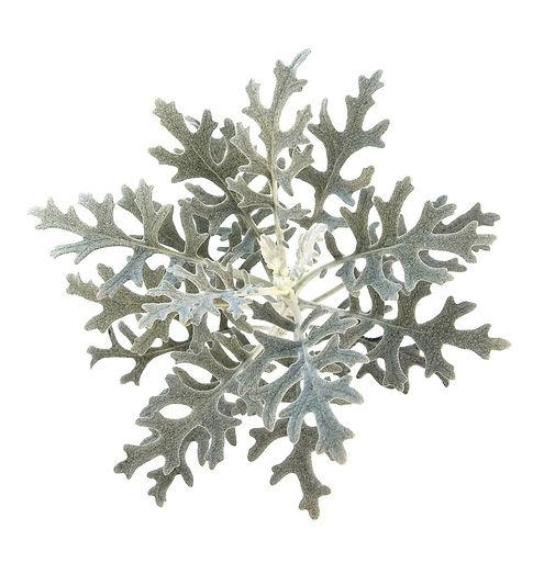jardin floral design,  fort myers, florist, ft, images, pictures, photos, silver-white