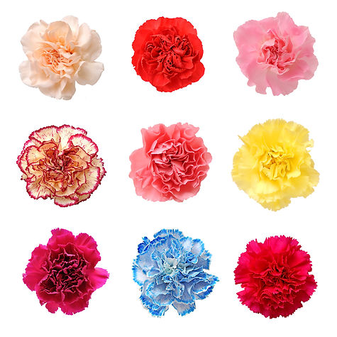 jardin floral design,  fort myers, florist, ft, pink, red, yellow, blue, cream