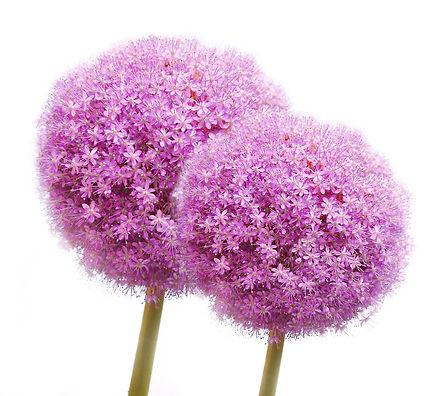 wedding flowers, jardin floral design, fort myers, florist, ft, images, pictures, photos, purple
